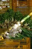 Зеленые луки лежат на желтых пластичных коробках в рынке, луч солнца освещают белые шарики с корнями Стоковое Изображение RF