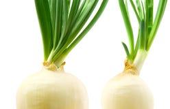 зеленые луки Стоковое фото RF