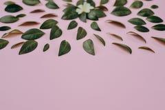 Зеленые маленькие листья представленные над розовой предпосылкой отдельно Много маленьких листьев для украшать любую открытку стоковое изображение