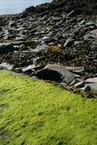 Зеленые мох, морская водоросль и утесы стоковые изображения
