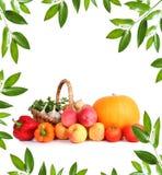 зеленые овощи стоковые фото