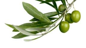 Зеленые оливки с ветвью на белой предпосылке Стоковое Изображение