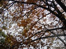 Зеленые оранжевые листья коричневого дуба Стоковые Изображения RF