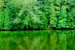 зеленые отражения Стоковое Изображение RF