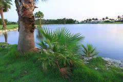 Зеленые пальмы, заводы и вода озера Плохая погода на пути ветрено Остров Аруба стоковые изображения