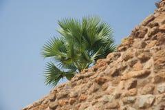 Зеленые пальмы за старой стеной кирпичей стоковое изображение