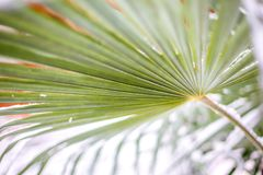 Зеленые пальмы лист в снеге стоковые фото