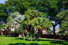 Зеленые пальмы на зеленой лужайке стоковые изображения