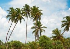 зеленые пальмы Стоковое Фото