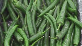 Зеленые перцы chili на рынке видеоматериал
