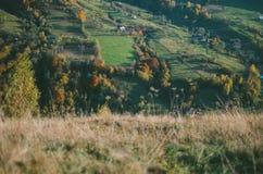 Зеленые поля и красочный лес осени Стоковая Фотография RF