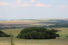 Зеленые поля и луга стоковые изображения