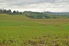 Зеленые поля и опоры Стоковые Изображения