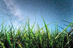 Зеленые поля риса и ноча звезды Стоковая Фотография