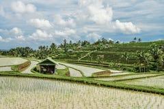 Зеленые поля риса на острове Бали Стоковая Фотография RF