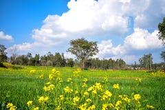 Зеленые поля урожая пшеницы стоковая фотография
