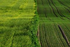Зеленые поля Стоковая Фотография RF