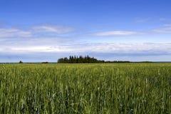 Зеленые поля Стоковое Фото