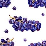 Зеленые, пурпурные, вкусные, здоровые виноградины Южный, зрелый, свежий, ягода вина Пук очень вкусных, сочных виноградин r иллюстрация вектора