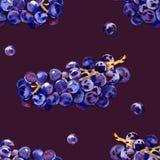 Зеленые, пурпурные, вкусные, здоровые виноградины Южный, зрелый, свежий, ягода вина Пук очень вкусных, сочных виноградин r иллюстрация штока
