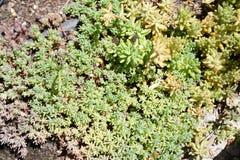 Зеленые растения в саде стоковое изображение rf