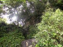 Зеленые растения и деревья глубоко внутри к тропическому лесу Стоковые Фото