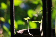Зеленые растения мола в backlight стоковое фото