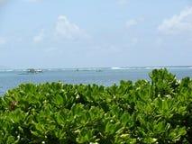 Зеленые растения на пляже стоковое изображение rf