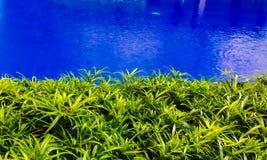 Зеленые растения около голубого бассейна Стоковое Изображение RF