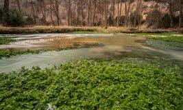 Зеленые растения реки стоковые фотографии rf