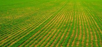 зеленые рядки Стоковая Фотография RF
