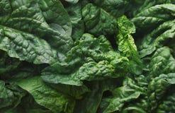 Зеленые свежие листья шпината закрывают вверх сверху, зеленая предпосылка, Стоковые Изображения RF