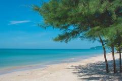 Зеленые сосны на песке приставают к берегу с красивым взглядом seascape и голубым небом на заднем плане на пляже Lao Chao Стоковая Фотография RF