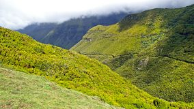 Зеленые сочные наклоны горы в горы Мадейры стоковые изображения