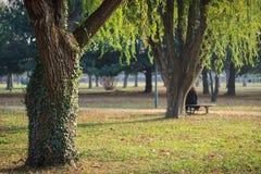 Зеленые старые деревья в предпосылке сада Стоковая Фотография RF