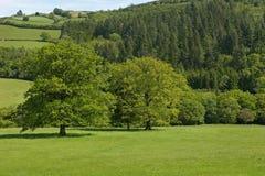 зеленые тени Стоковая Фотография RF