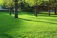 Зеленые травы и листья Стоковое Изображение RF