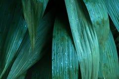 Зеленые тропические листья, предпосылка лист, концепция природы Стоковое Фото