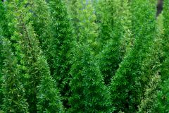 Зеленые тропические листья, предпосылка лист, концепция природы Стоковая Фотография RF