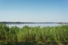 Зеленые тростники около реки и голубого неба стоковая фотография