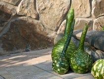 зеленые тыквы Стоковая Фотография RF