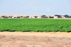 Зеленые урожаи в пустыня Негев Израиле стоковая фотография