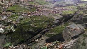 зеленые утесы Стоковые Фотографии RF