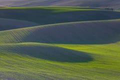 Зеленые холмы Моравии стоковое изображение