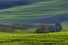 Зеленые холмы Моравии стоковая фотография