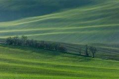 Зеленые холмы Моравии стоковые изображения