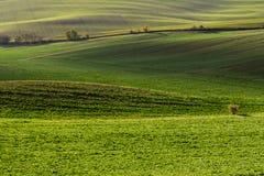 Зеленые холмы Моравии стоковое фото rf