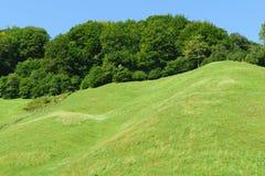 Зеленые холмы предусматриванные в зеленом лесе Стоковая Фотография
