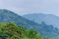 зеленые холмы тропические Стоковые Изображения