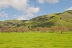 зеленые холмы Стоковые Изображения RF
